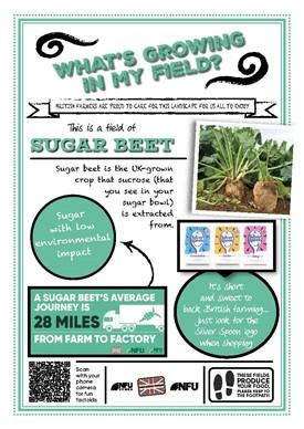 What's growing in my field – sugar beet