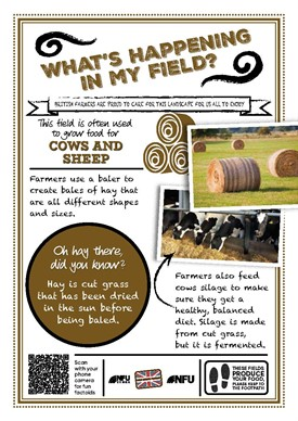 What's growing in my field – hay and silage