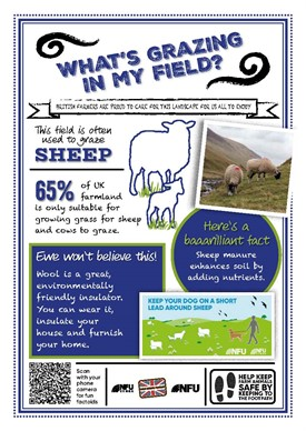 What's growing in my field – Sheep