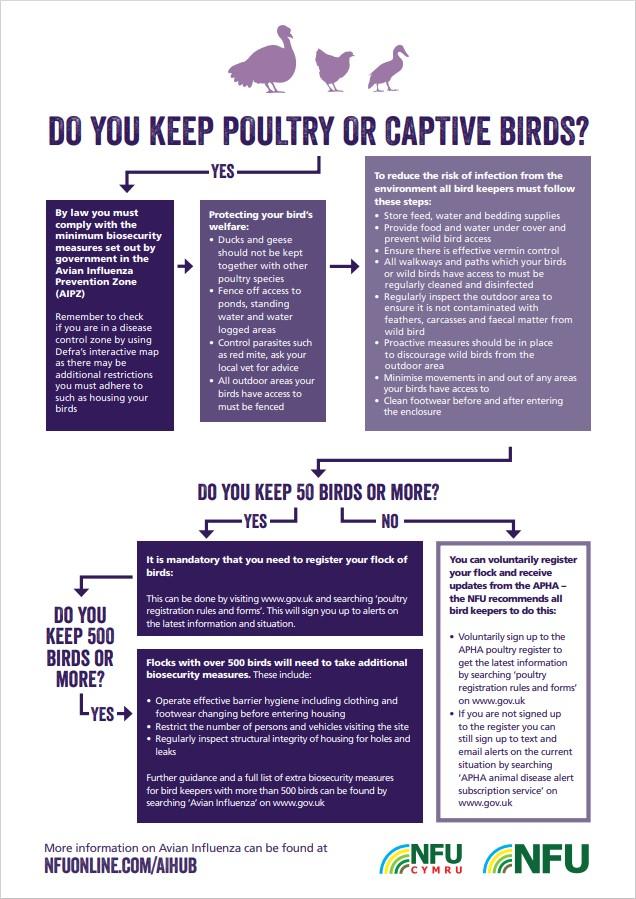 Avian Influenza flow chart March 2021
