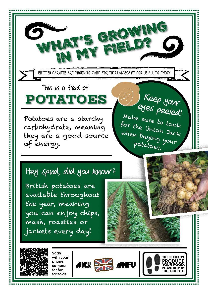 What's growing in my field – Potatoes