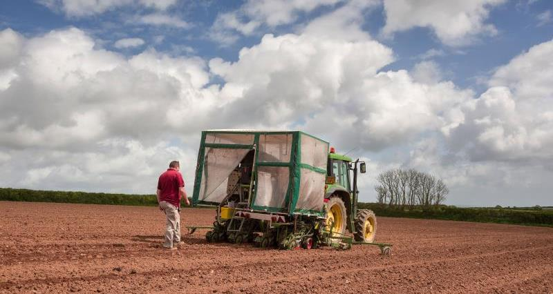 Maize drilling_23168