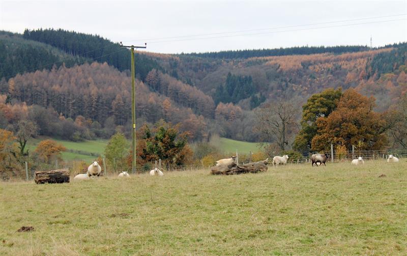 Sheep and hills at Clun_61898