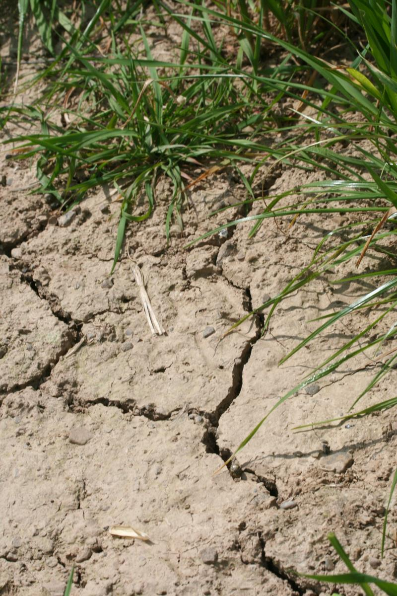 Parched earth_20877