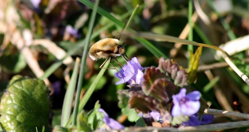 MEPs pass motion on pollinators