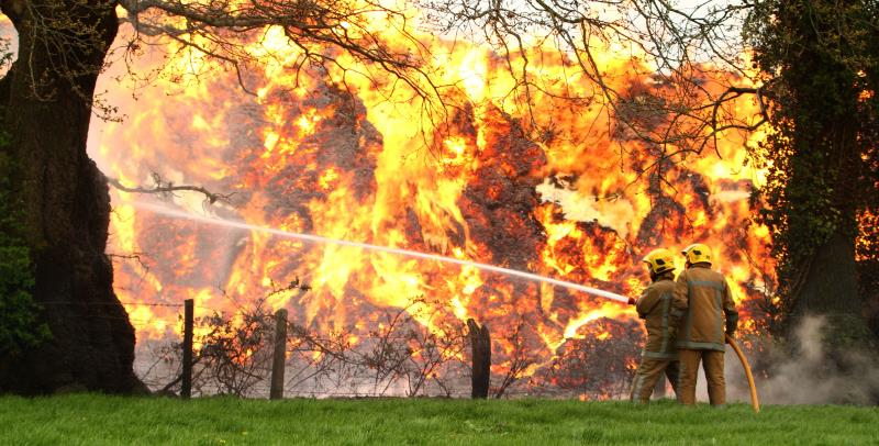 Elephant grass fire _38611