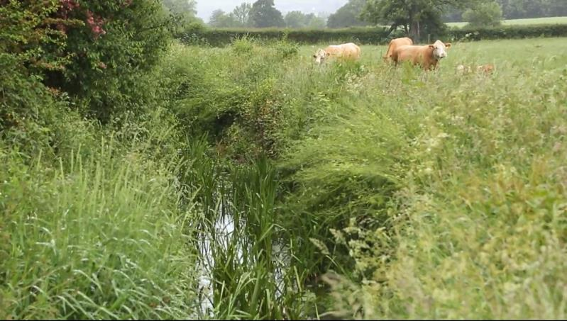 Watercourse buffer strip_36281