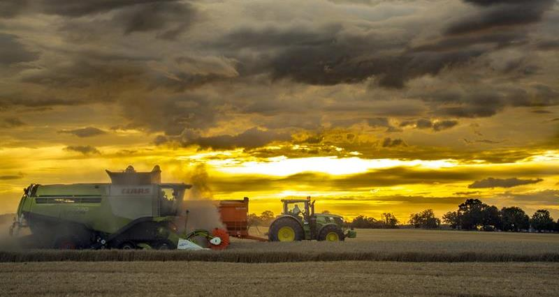 Harvest at Park Farm Thorney_65124