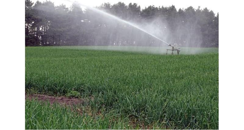 Irrigator in action_36171