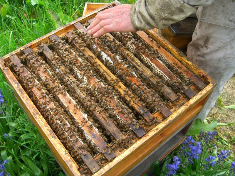 Open bee hive
