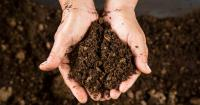 compost, nutrients, environment, soil, waste_44885