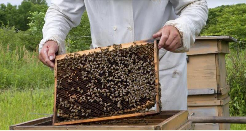Guidance for beekeepers during the Covid-19 outbreak