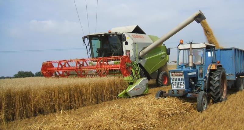 Harvest at the Fordhams_10107