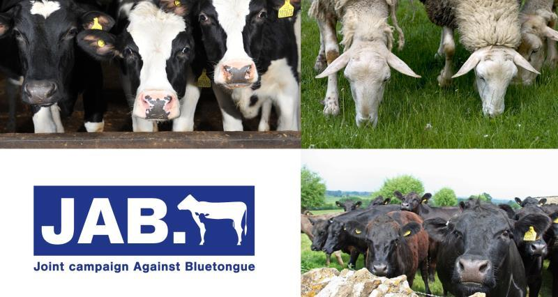 Bluetongue: What you need to know