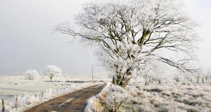 Winter road in January_6740