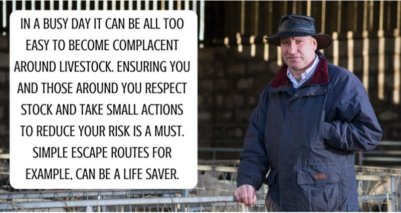 Farm Safety Week: ' A minor lapse of livestock judgement left me with a broken back'