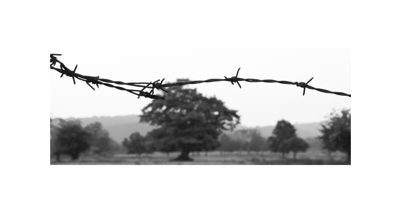 farm safety black and white image for blog banner, Farm Safety Partnership, HSE_28854