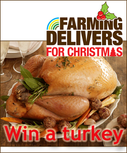 win a turkey competition