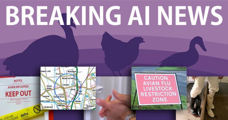breaking ai news picture, bird flu, avian influenza_40716
