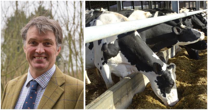 john torrance dairy farmer, essex, holstein cows_46004