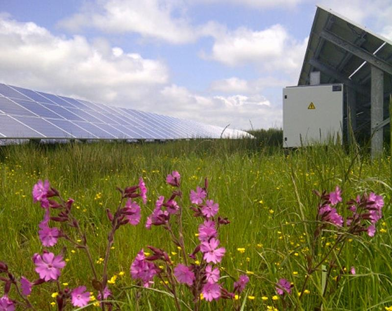 solar farm and wildflowers_40539