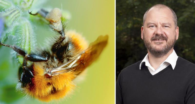 chris hartfield and pollinators image, bee on flower, agri-environment, blog_35214