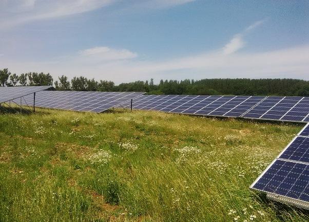 solar farm with biodiversity benefits_33164
