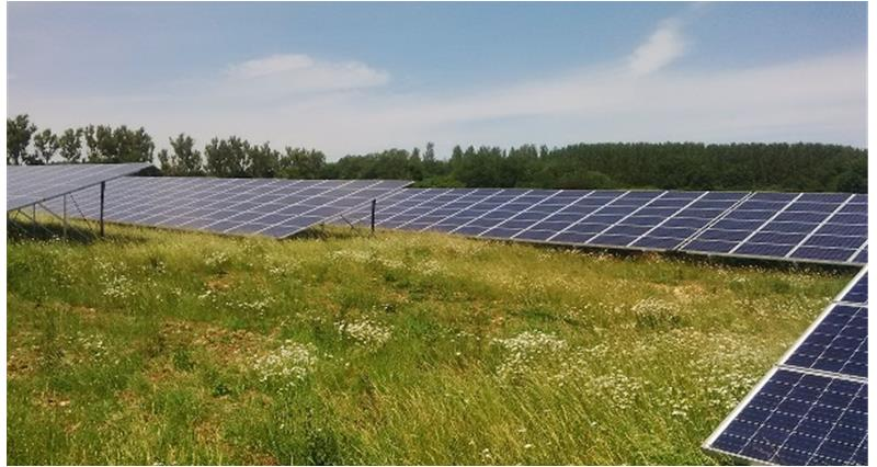 solar farm with biodiversity benefits_33164