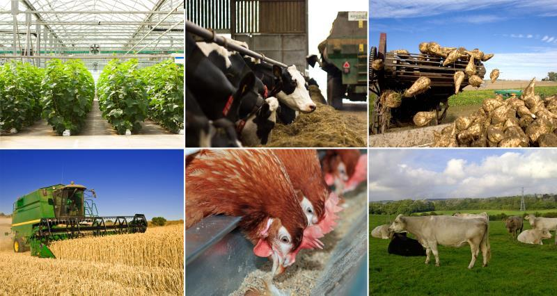 What does Brexit mean for YOUR farming sector?