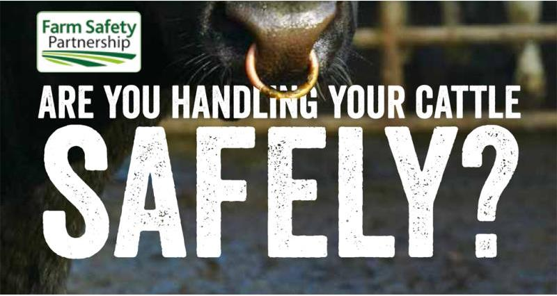 safe handling of cattle_flyer_v4, july 2016-1_35778