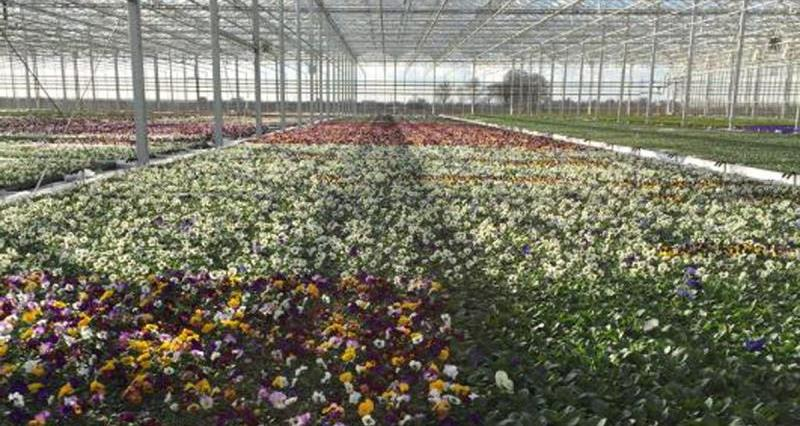 Championing protected ornamental producers