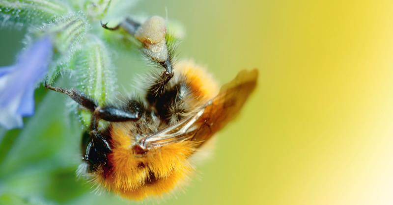pollinators image, bee on flower, agri-environment_29080
