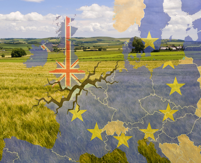 eu, referendum, brexit, trade, fields and map of europe, bulletin