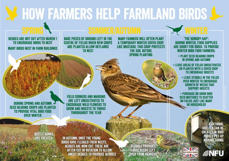 farmland_birds_poster_a3l_v07compressed_40491