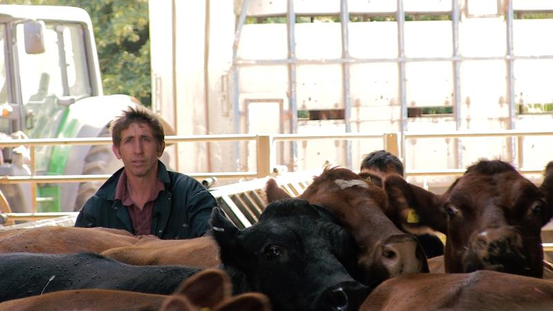 ian higgens, cattle, tb free england, bovine tb still 2_45480