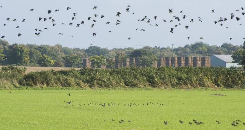 Bird control licences: Advice for members