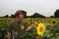 Olly Harrison and his sunflowers 1_37294