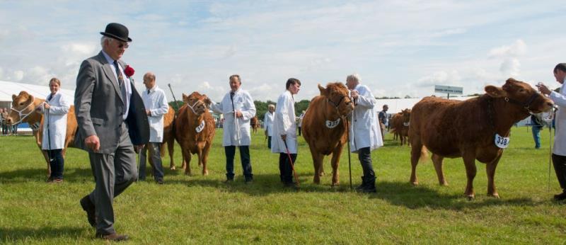 Livestock at Cheshire Show_42665