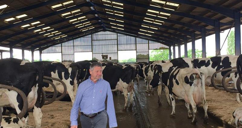 Kit Hopley in amongst the cows_67056