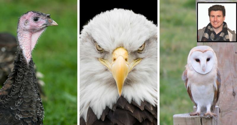 Talking Turkeys Owls And Eagles