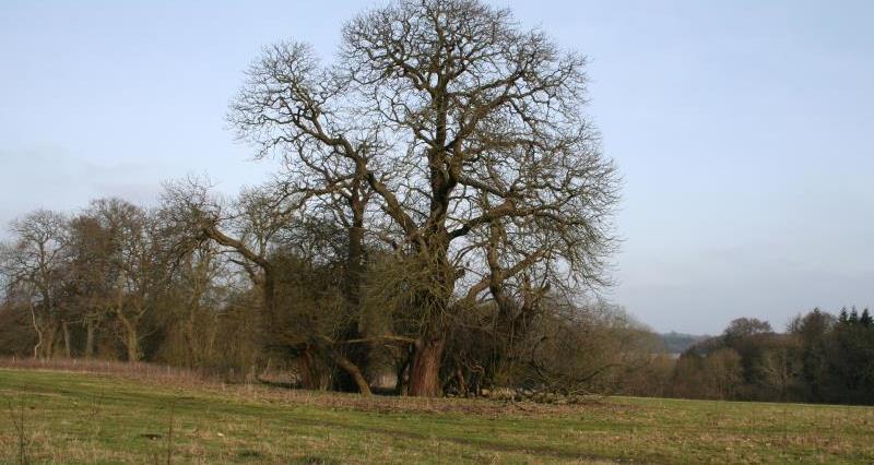 historic parkland, Buckinghamshire Chilterns AONB_57338