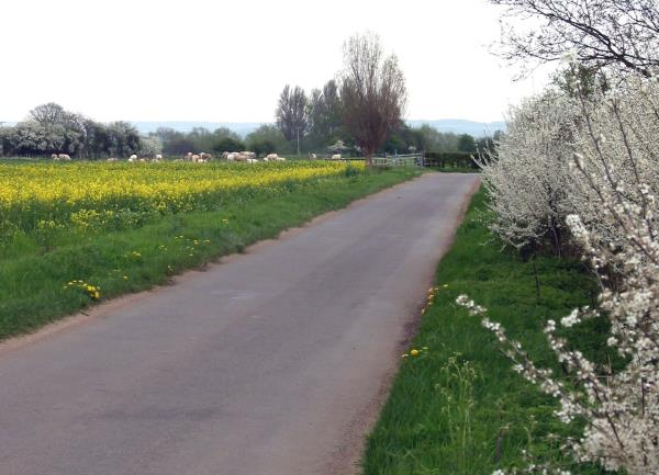 Oxfordshire country lane late spring_14722