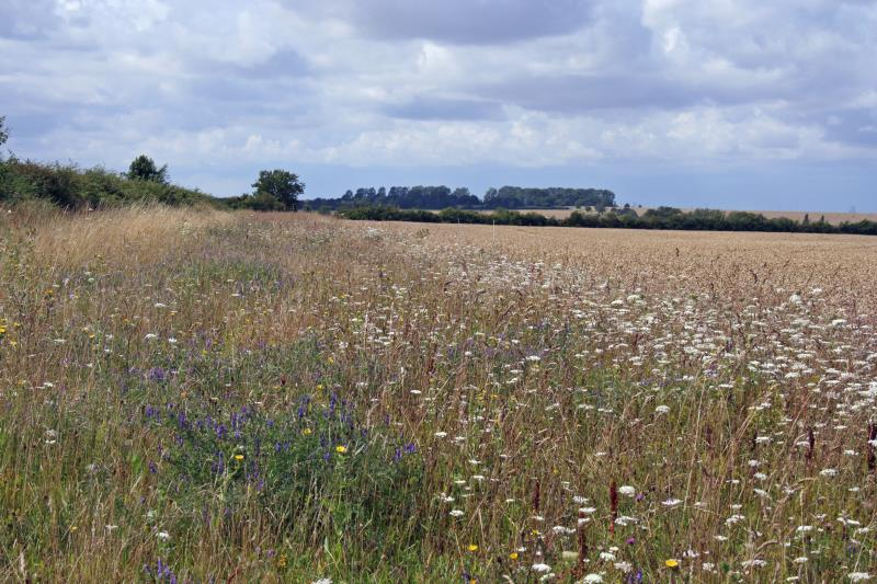 Wildflower margin_12033