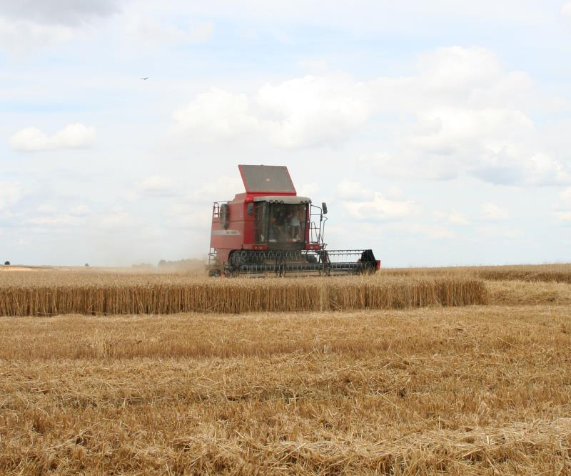 Combining wheat, Oxfordshire_37498