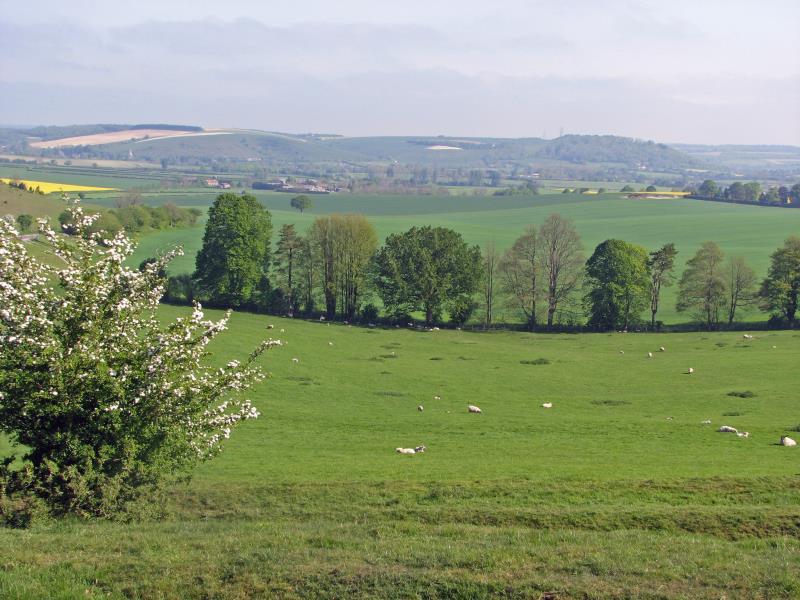 Downland scene, May_13814