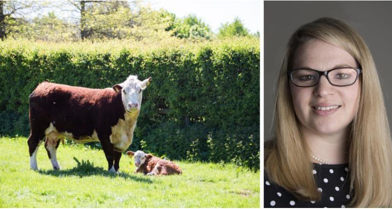 Calf health blog - Rebecca Veale_57987