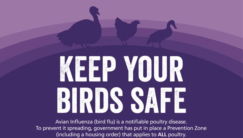 Avian Influenza infographic January 2016_40242
