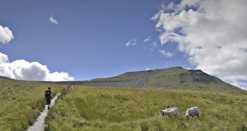 Ingleborough in the Yorkshire Dales_12321