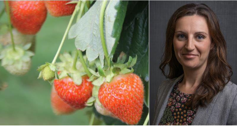 Strawberries and Hayley Campbell Gibbons_50928