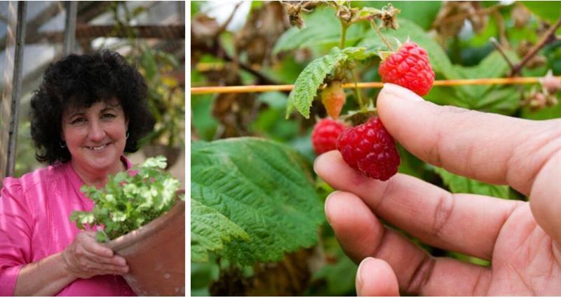 Pippa Greenwood's September gardening tips